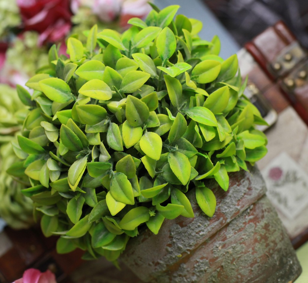 BB0603-900 potted green herb plant square small