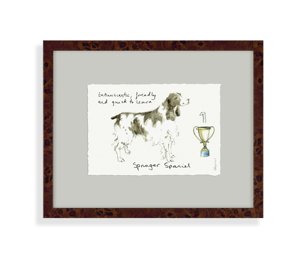 Springer spaniel picture tutti decor ltd for Home decor uk ltd
