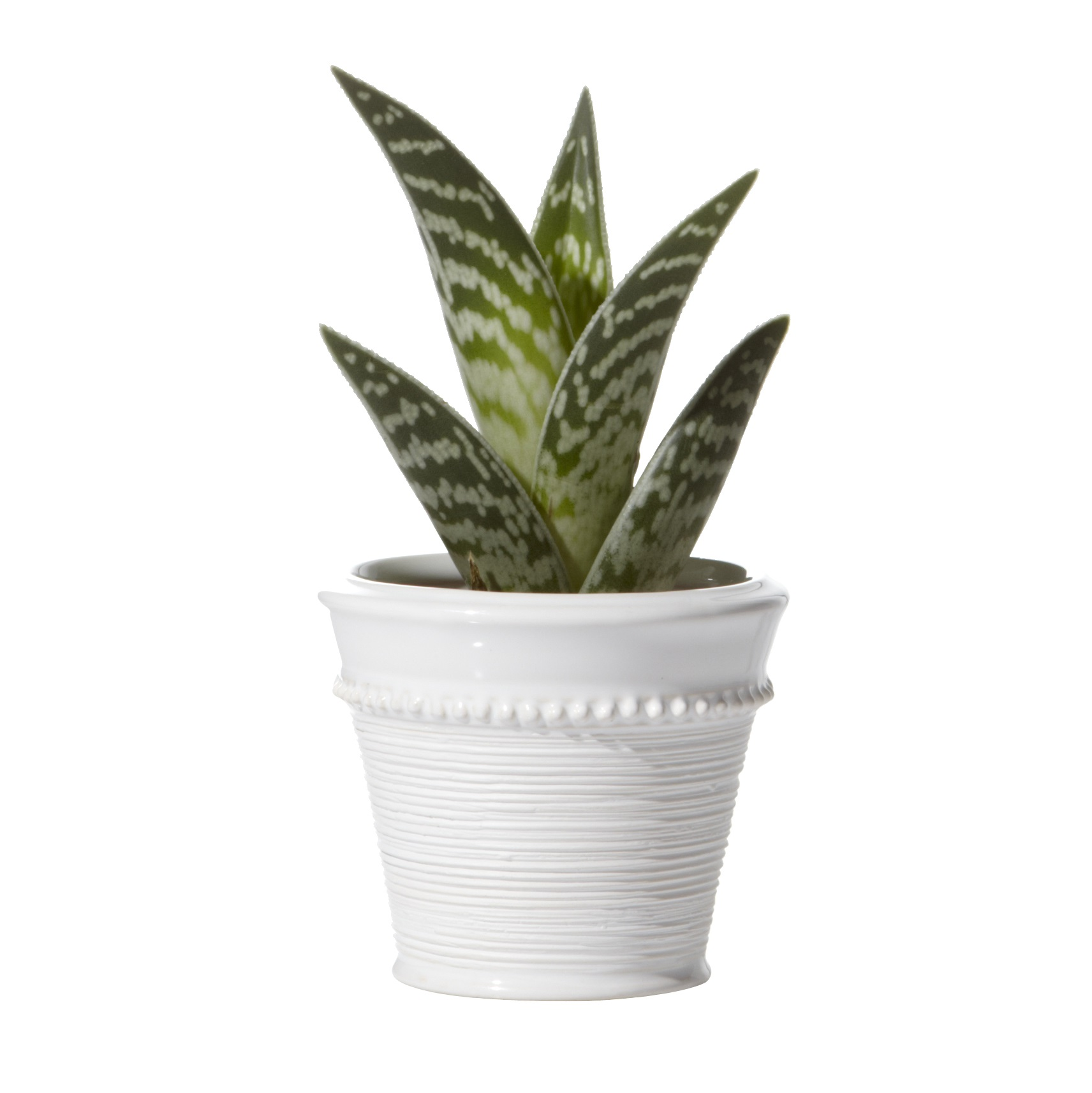 Set of 2 white ceramic cactus pots tutti decor ltd Cactus pots for sale