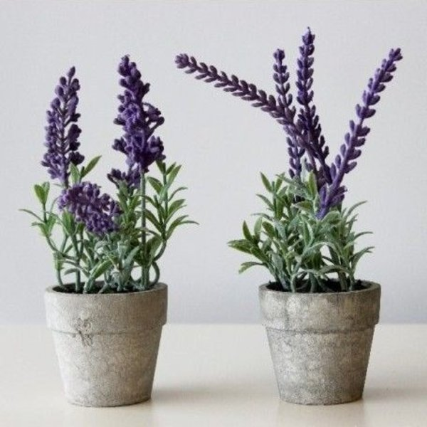 lavender-pots-twelve-tray-designs_600x600