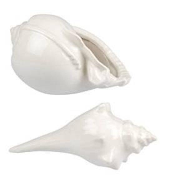 shells_600x600
