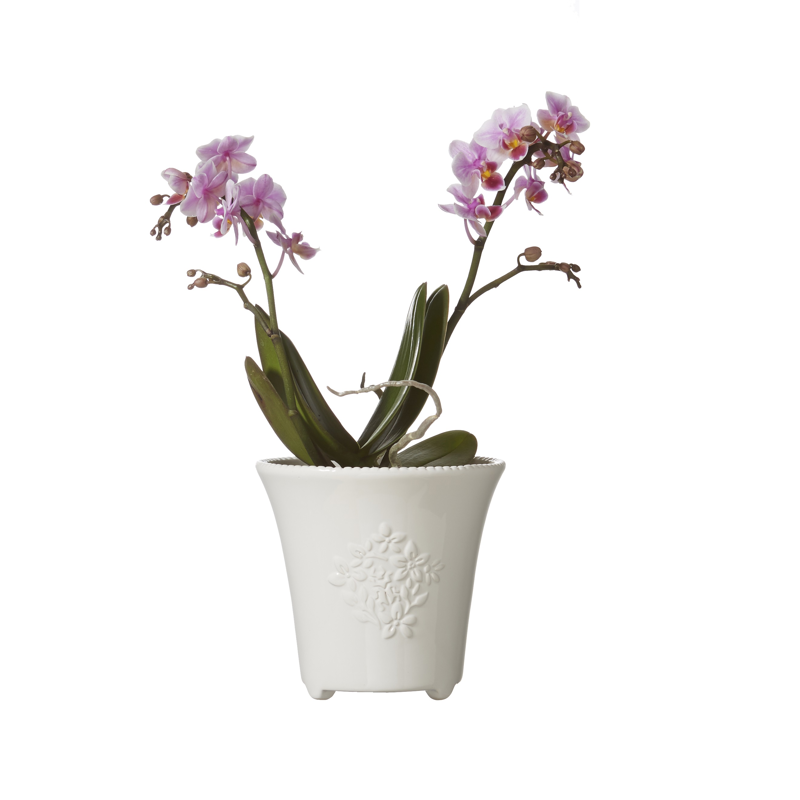 224 & White Sally Small Flower Pot Planter