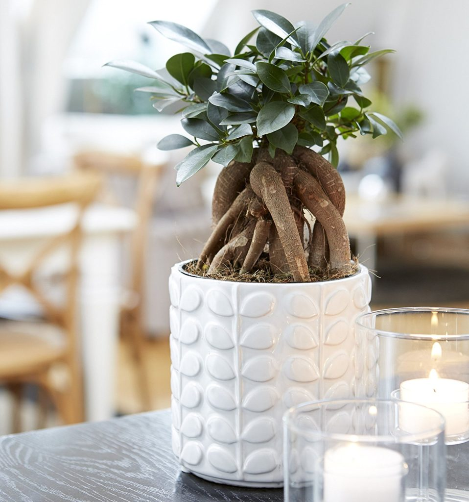 orla-planter-white-original