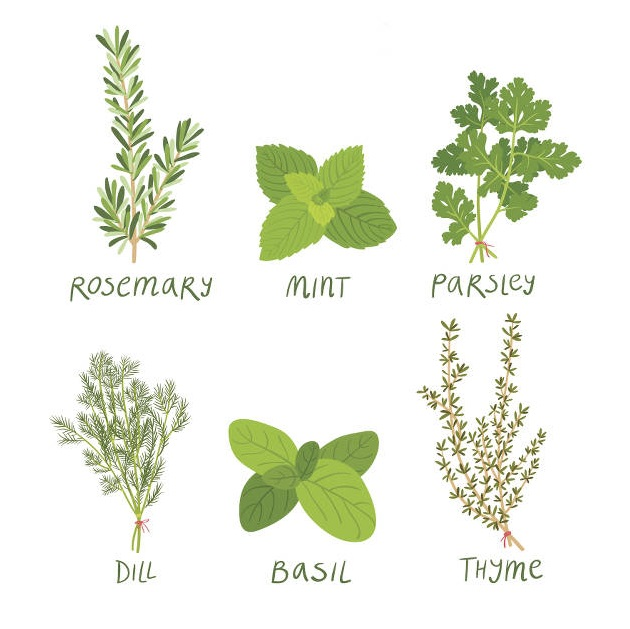 best-herbs-table