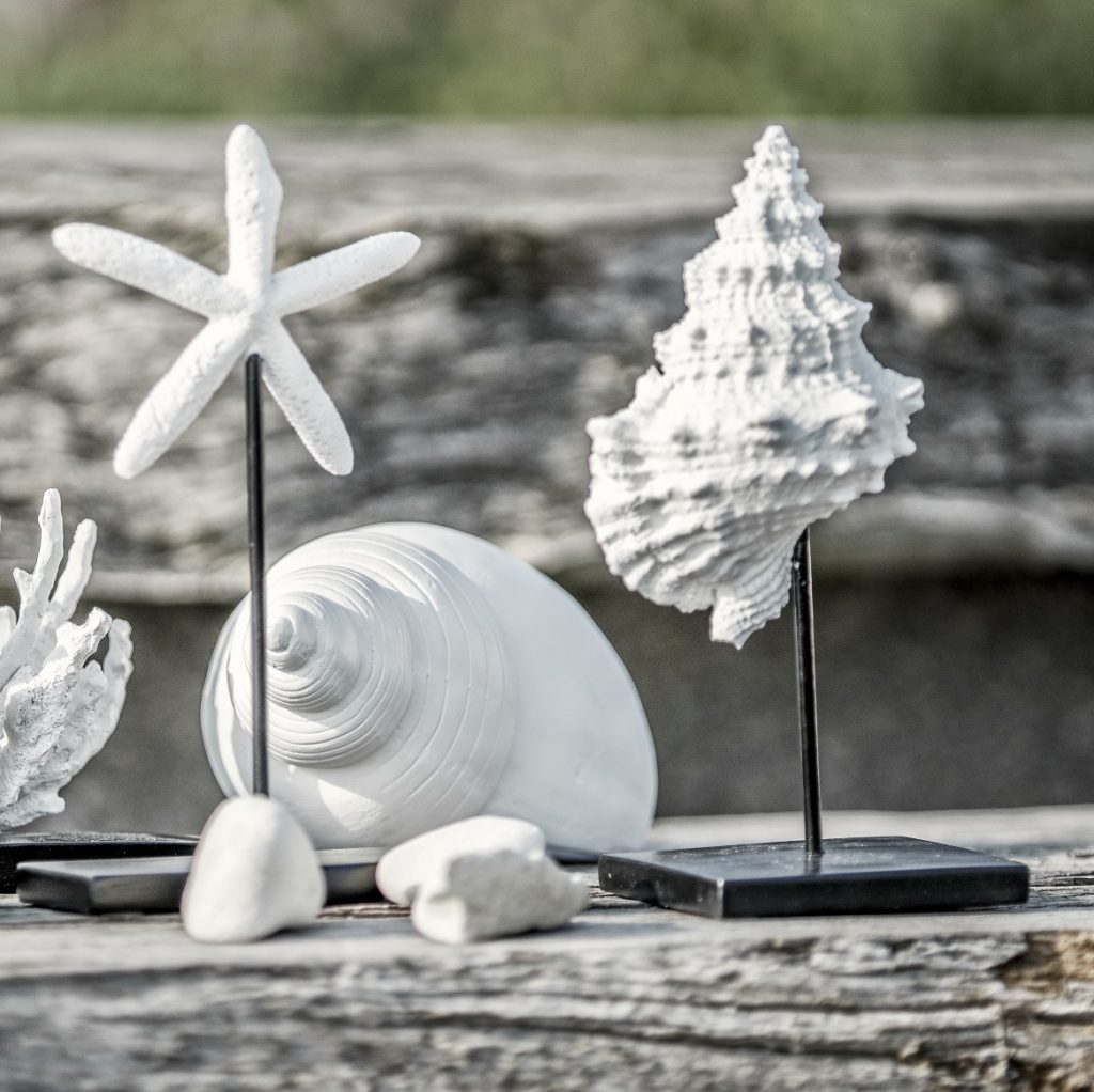 conch-starfish-decorative-ornaments[1]