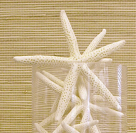 starfish-display