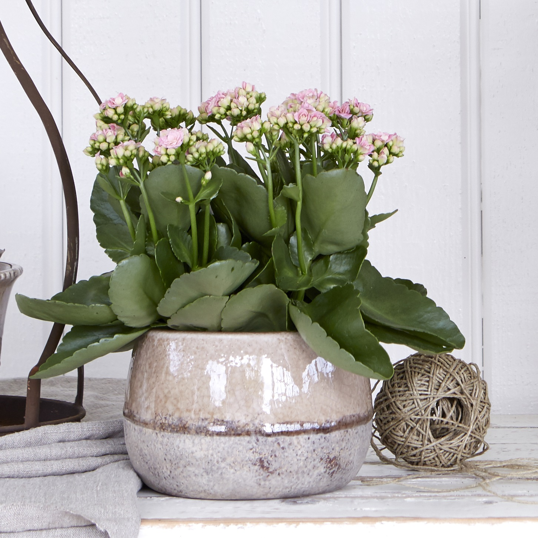 Blush Alva Decorative Ceramic Stone Flower Pot Planter Bowl Crackle