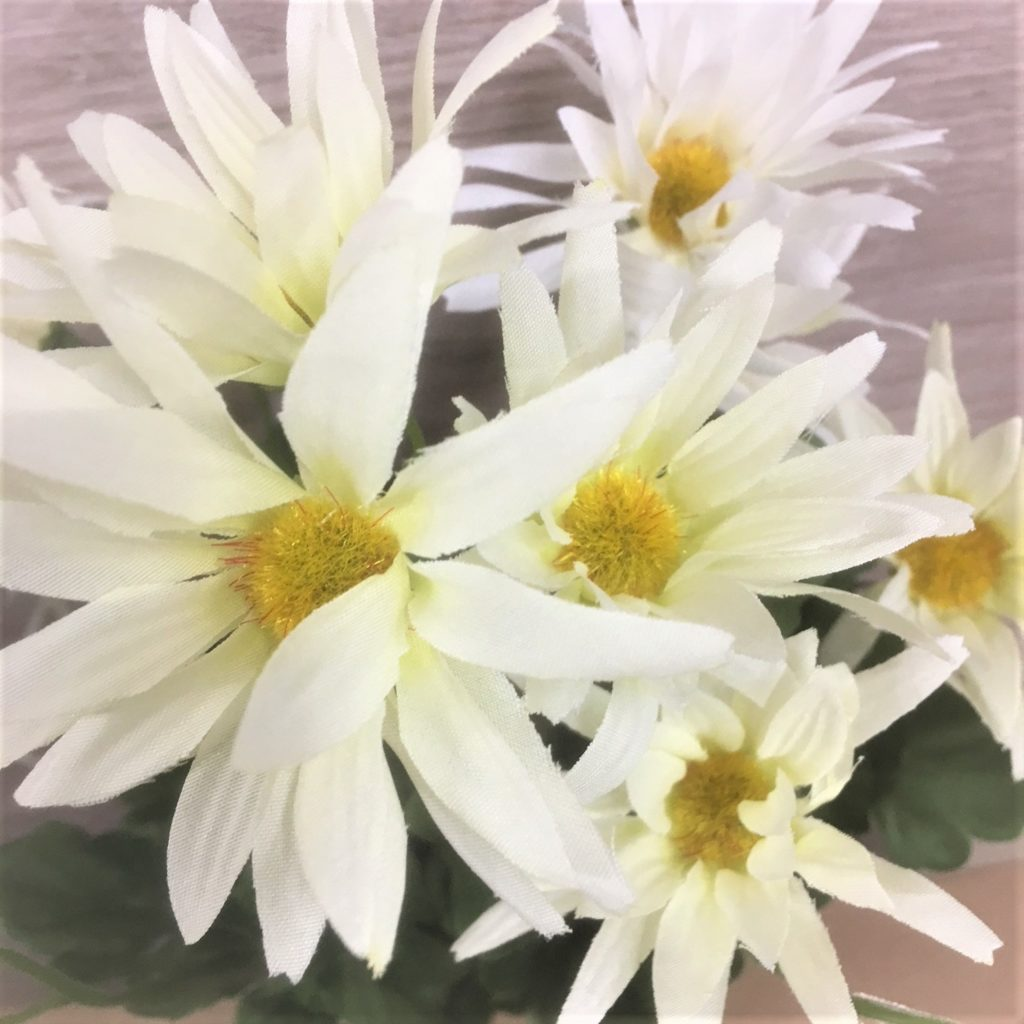 white-wild-daisy-bunch-3