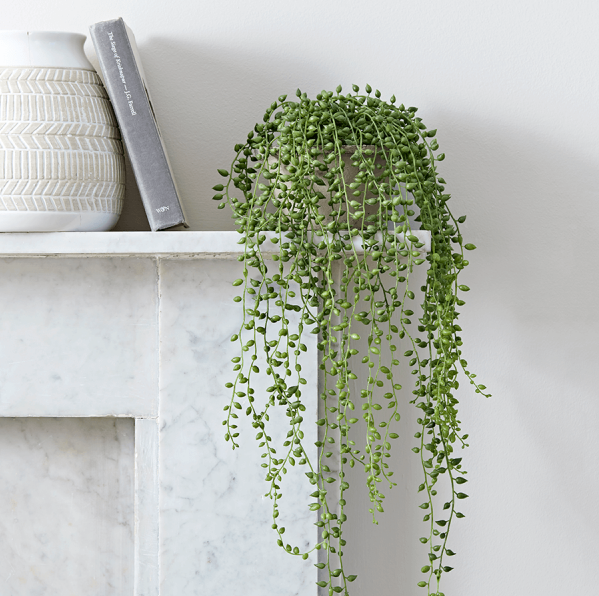 string of pearls artificial plant in cement pot tutti. Black Bedroom Furniture Sets. Home Design Ideas