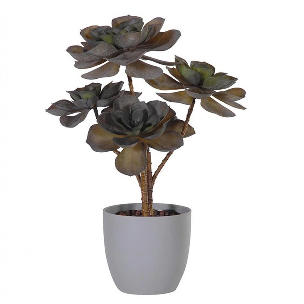 dark-olive-green-echeveria-plant-in-grey-pot