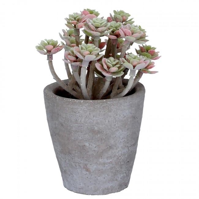 sedum-plant-1