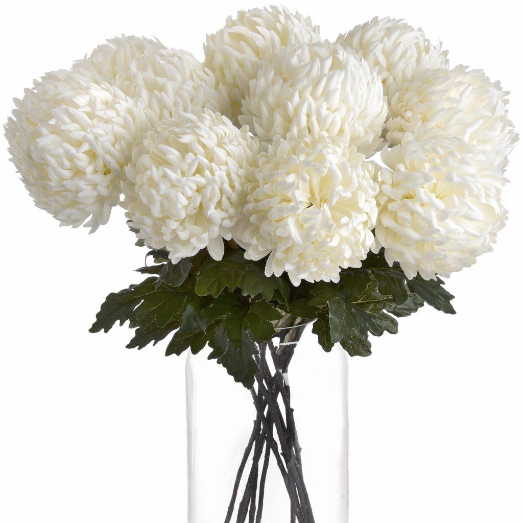 18964- large-white-chrysanthenam