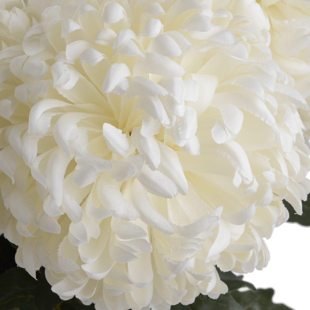 18964- large-white-chrysanthenam-close