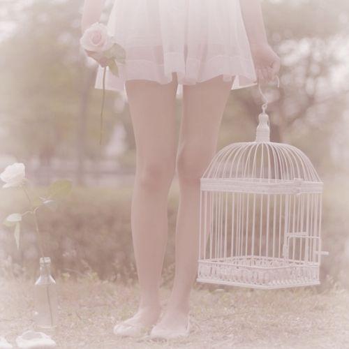 58c5a358f82006c4024c65e445162806–birdcages-art-photography