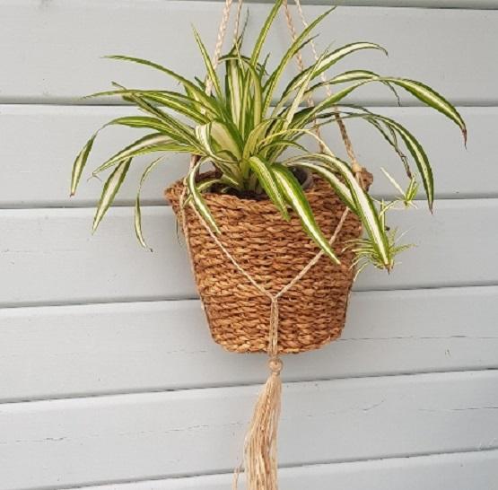 seagrass-hanging-basket-l