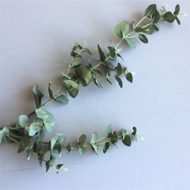eucalyptus-stem