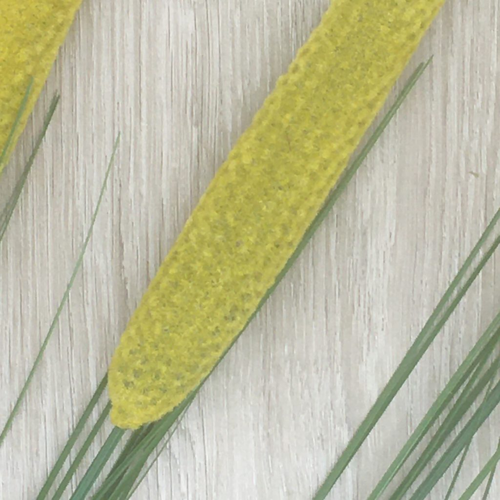 cat-tail-flowers-set-3-yellow