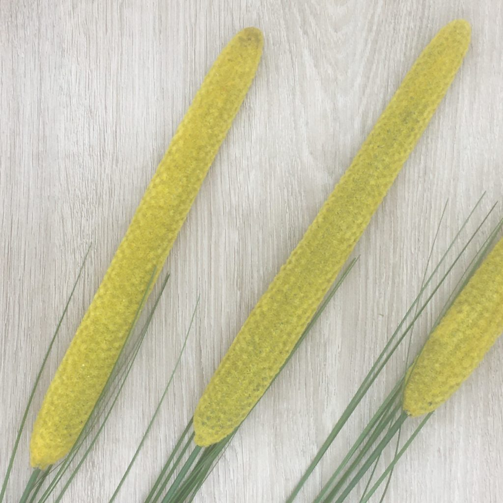 cat-tail-flowers-set-3-yellow-c