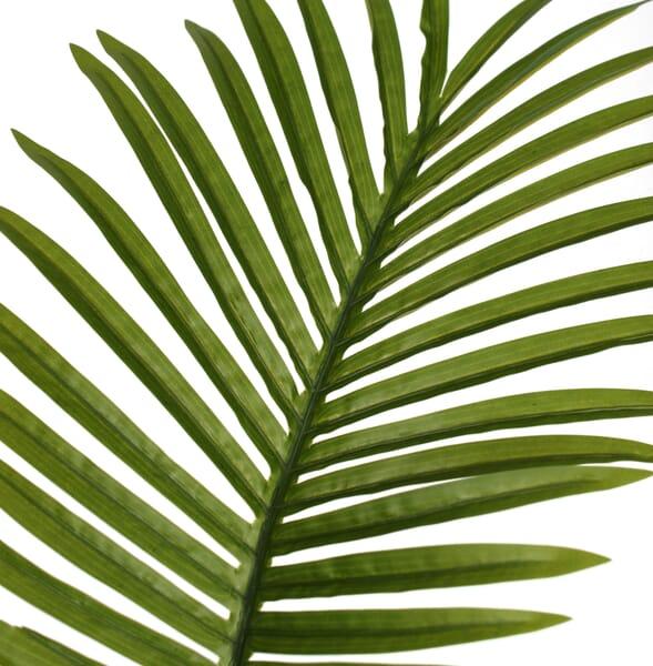 paradise-leaf-close